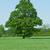 ferme · viol · domaine · écologie · environnement - photo stock © kubais