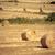 tájkép · természet · fák · mező · zöld · vidék - stock fotó © kubais