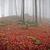 magia · nebuloso · floresta · ver · árvores · dente - foto stock © kubais