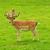 два · оленей · зеленая · трава · трава · природы · фон - Сток-фото © kuligssen