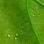 belo · folha · natureza · verde · macro - foto stock © kuligssen