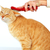 red cat with brush stock photo © kurhan