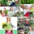 collage · couple · jardin · fruits · arbres · salade - photo stock © kurhan