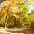 vibrante · amarillo · árbol · hierba · paisaje - foto stock © kurhan