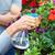 люди, · работающие · питомник · садоводства · семьи · девушки · весны - Сток-фото © Kurhan