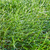 erba · verde · primo · piano · rugiada · gocce · fiori · primavera - foto d'archivio © kurhan