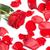 kırmızı · gül · güzel · çiçek · tebrik · kartı · sevmek · gül - stok fotoğraf © Kurhan