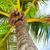 hermosa · playa · tropical · palmera · océano · paisaje - foto stock © kurhan