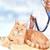 gengibre · gato · veterinário · médico · vermelho · veterinário - foto stock © kurhan