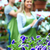 люди, · работающие · питомник · садоводства · компьютер · семьи · девушки - Сток-фото © kurhan