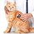 vermelho · gato · veterinário · médico · veterinário · clínica - foto stock © kurhan