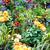 красивой · цветы · саду · весны · садоводства · цветок - Сток-фото © Kurhan