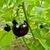 organic eggplant in a garden stock photo © kuzeytac