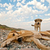 playful dogs on the beach stock photo © kuzeytac