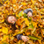 Little Girl Playing With Autumn Leaves stock photo © Kuzeytac