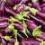 Organic Fresh Eggplant At A Farmer Market stock photo © Kuzeytac