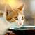 głodny · kotek · spodek · pełny · mleka · żywności - zdjęcia stock © Kuzeytac