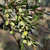 jovem · azeitonas · ramo · chuva · mediterrânico · oliva - foto stock © Kuzeytac