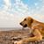 собака · пляж · играет · небе · воды - Сток-фото © kuzeytac