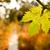 uva · videira · caminho · jardim · folha · vinha - foto stock © Kuzeytac