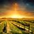 coucher · du · soleil · vignoble · automne · terre · domaine - photo stock © kwest