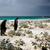 koning · water · falkland · eilanden · vrienden · groep · vogels - stockfoto © kwest