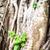 gyökerek · öreg · fa · park · sötétség · textúra - stock fotó © kyolshin