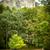 pedra · caminho · stonewall · primavera · cidade · parede - foto stock © kyolshin