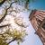 cloth hall tower krakow poland europe stock photo © kyolshin