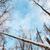 huş · ağacı · ahşap · orman · kapalı · kar · kış - stok fotoğraf © kyolshin