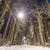 tél · éjszaka · fagyott · erdő · hó · hóvihar - stock fotó © kyolshin