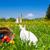 子供 · イースターエッグハント · バニー · 草原 · 春 · フォアグラウンド - ストックフォト © kzenon