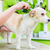 woman is examining dog for flea at pet groomer stock photo © kzenon