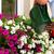 varanda · flores · Espanha · rua · flor · casa - foto stock © kzenon