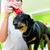 herido · perro · vendaje · veterinario · verde · médico - foto stock © kzenon