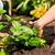 ervas · jardim · ferramentas · primavera · comida - foto stock © kzenon