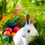 Easter bunny on meadow with basket and eggs stock photo © Kzenon