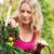 kadın · hasat · domates · bahçe · bahçıvanlık · eller - stok fotoğraf © kzenon