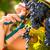 женщину · винограда · красивой · еды · персика - Сток-фото © kzenon