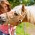 女性 · 馬 · ポニー · ファーム · 幸せ - ストックフォト © Kzenon