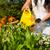 jardinage · été · femme · fleurs · jaune - photo stock © Kzenon
