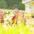 anne · çocuklar · çayır · şanslı · aile · kadın - stok fotoğraf © kzenon