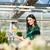 femenino · jardinero · mercado · jardín · vivero · florista - foto stock © Kzenon