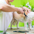 little dog being furdressed ny woman in parlor stock photo © kzenon