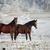dois · cavalos · fazenda · belo - foto stock © kzenon