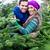 çift · satın · alma · noel · ağacı · pazar · bakıyor · kadın - stok fotoğraf © kzenon