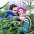 çift · satın · alma · noel · ağacı · pazar · bakıyor · adam - stok fotoğraf © kzenon