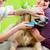 nő · golden · retriever · szőr · törődés · kutya · haj - stock fotó © kzenon