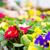fiorista · lavoro · impianto · donna - foto d'archivio © kzenon