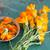 pote · planta · flor · flores · folha - foto stock © laciatek
